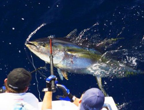 The Ultimate Guide to Yellowfin Tuna Fishing